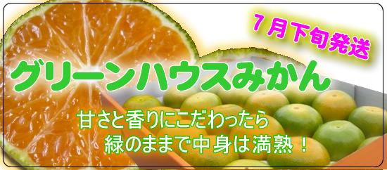 甘さと香りにこだわったら 緑のままで中身は満熟。グリーンハウスみかん2.5kg 送料無料!